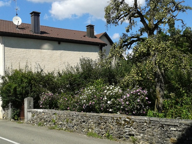 Opposite this charming old house and garden in Sauverny (France)...