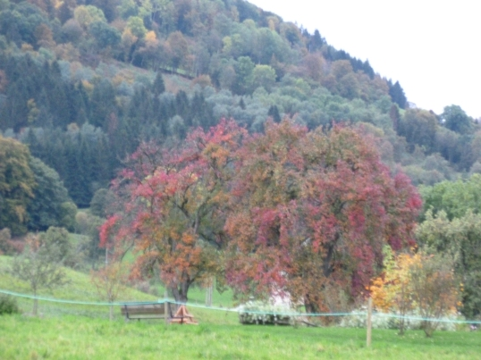 Autumn landscape in the Saleve.