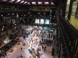 Natural History Museum - Evolution Hall.
