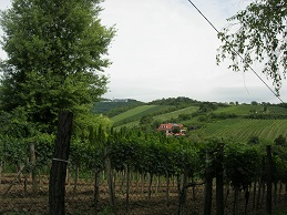 Grinzing vineyards.