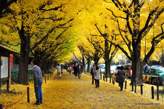 Autumn in Tokyo, from Shibuya246.com
