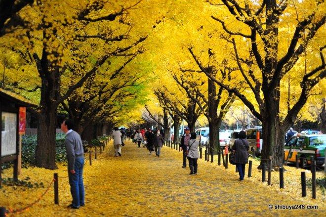 Autumn in Tokyo, from Shibuya246.com