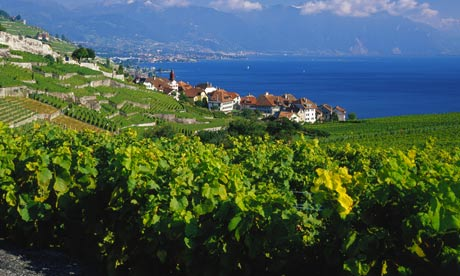 Much closer to home: Rivaz vineyard and village on Lake Geneva, from LaCote.com
