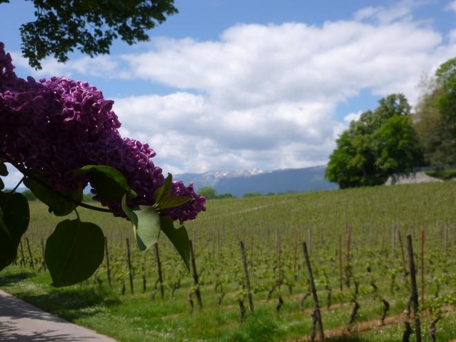 Reason 2: the vineyards