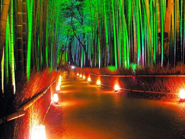 Bamboo grove by night in Kyoto, from tourist office website