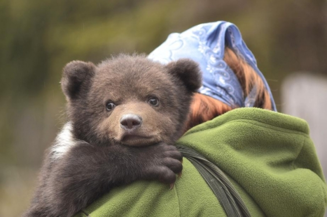 Orphaned bear cub and his rescuer, from ccplus.ro