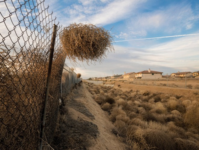 Tumbleweed caught in a fence, from National Geographic.